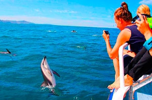 Boat trip, Fish picnic & Observation of Dolphins – excursion  NP Brijuni Islands - from Pula by boat
